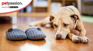Il cane è depresso