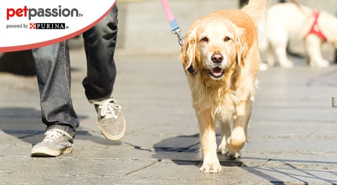 Passeggiata obbligatoria cani