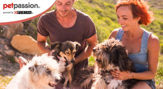 Pet therapy Villa Bonin