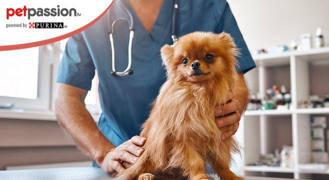 Farmaco tumore cane