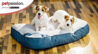 Pet therapy progetto