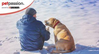 Psicologo per cani