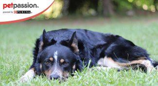 Stretching e massaggio cane