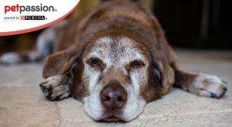 Chanel cane più vecchio del mondo
