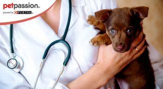 Donazione sangue cani