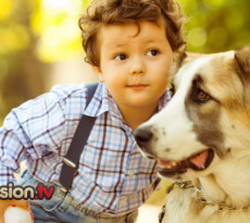 bambino-cane