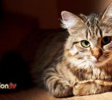 gatto-anziano-insufficienza-renale