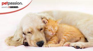 cane e gatto abbracciati