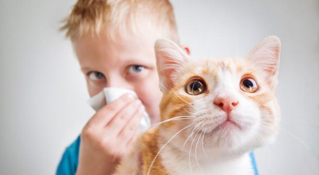 Allergia Al Gatto Tre Consigli Utili