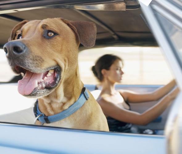 Consigli di viaggio con il cane