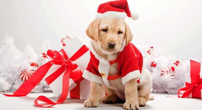 Un cucciolo in regalo a Natale: adozione responsabile