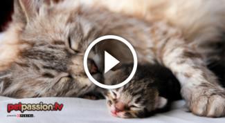 gattino che sogna