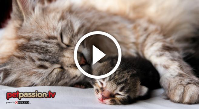 Video Di Mamma Gatta Che Abbraccia Il Gattino Che Sogna