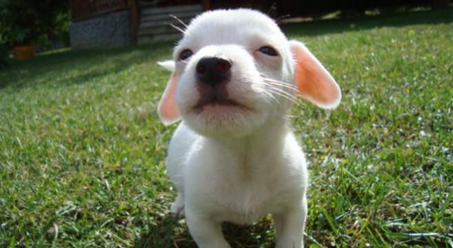 Razze di cani di piccola taglia divise per carattere