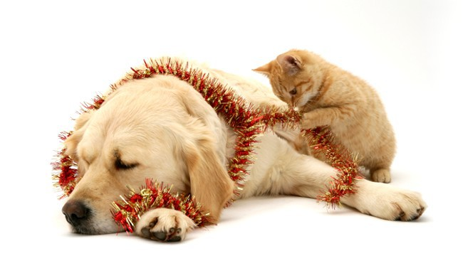 Auguri A Tutti Quelli Che Amano Cani E Gatti