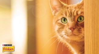 I gatti e le porte