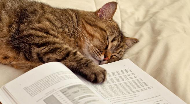 Chi Preferisce I Gatti è Più Intelligente Di Chi Ama I Cani