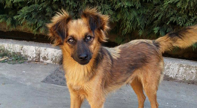 Cucciolo di cane taglia piccola in adozione in lombardia