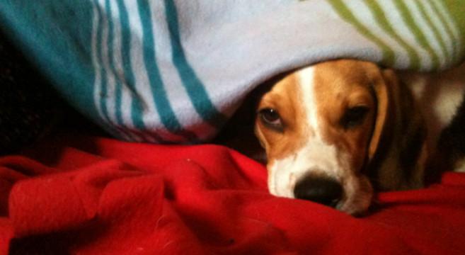 5 Consigli Utili Per Proteggere Il Cane Dal Freddo E Dal Gelo