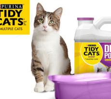 Insegnare Al Gatto Ad Usare La Lettiera Consigli Utili