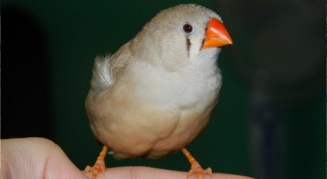 il tuo uccello così grandevecchio annata gay porno