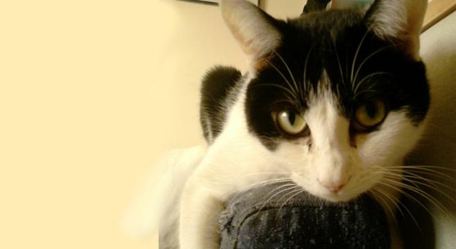Poltrona con gatti : Gatti e poltrona una passione graffiante
