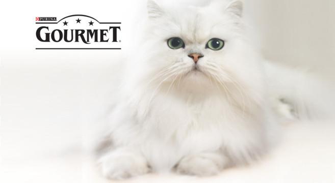Il Tuo Gatto Diventa Protagonista Con Gourmet