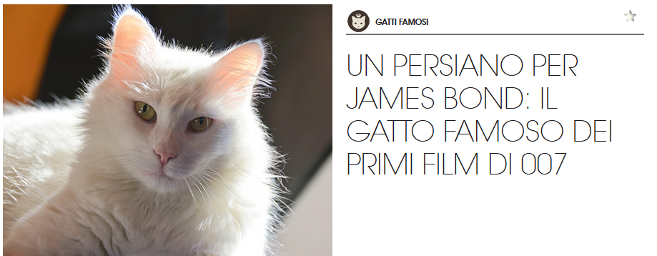 gatto-persiano-famoso-james-bond-gourmet