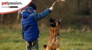 Razze cani da guardia più adatte ai bambini