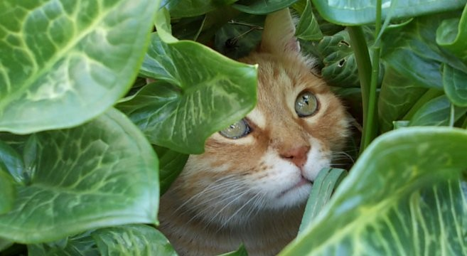 Gatto Arancione Carattere E Personalità