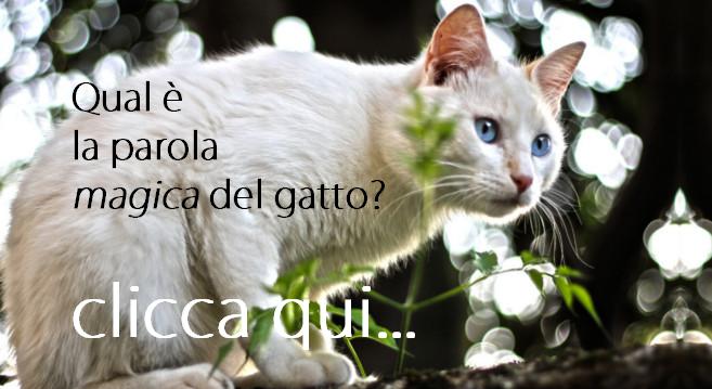 parola magica del gatto