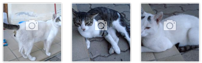 foto-gatti-trovatelli-community