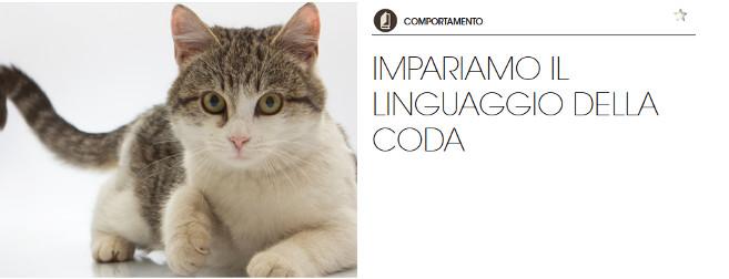 Significato coda gatto