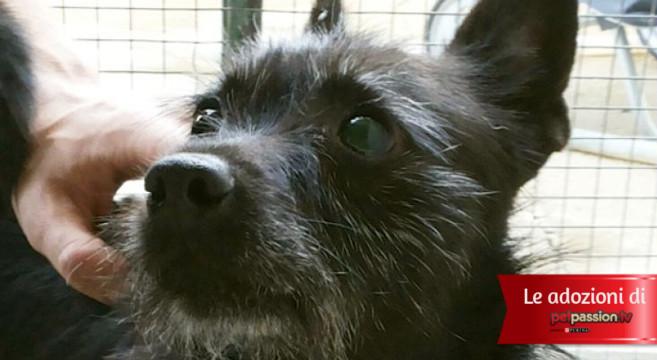 Adotta Un Cane Anziano Quanto Amore Ti Darà Petpassion