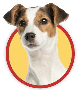 alimenti pericolosi cane