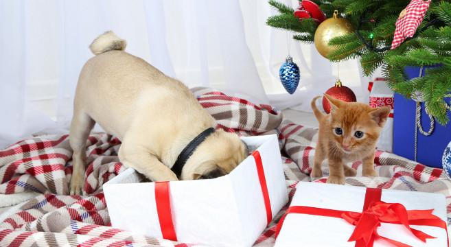 Immagini Cani Natale.Natale 2018 5 Idee Regalo Originali Per Cani E Gatti