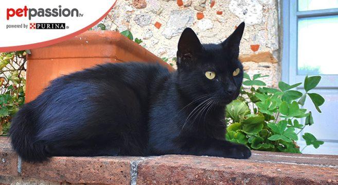 Migliori aforismi gatti neri e gatti