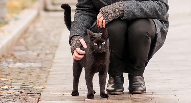 Aforismi gatti neri