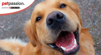 Perchè il cane sorride