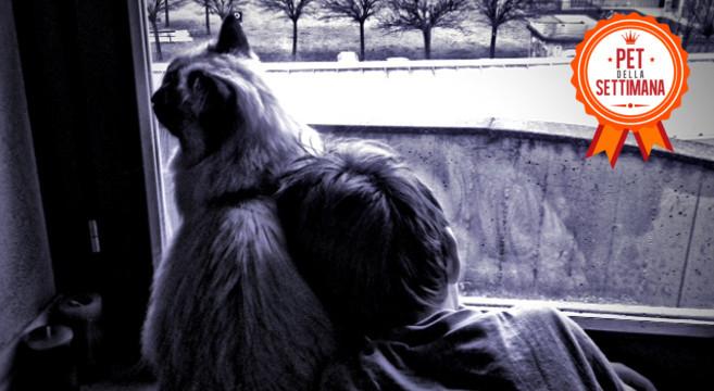 Storia Del Gatto Ragdoll E Del Suo Piccolo Amico