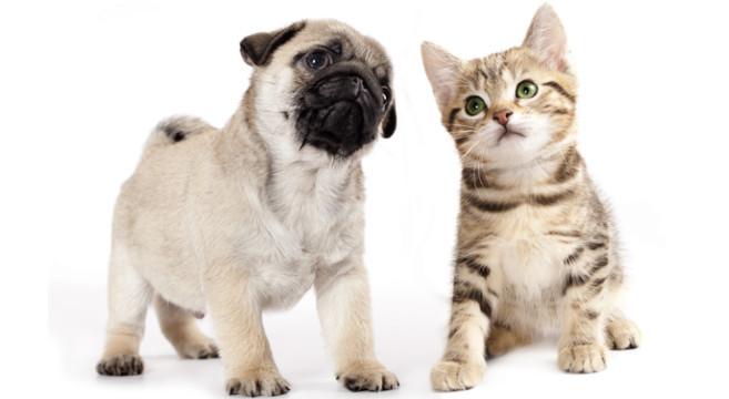cucciolo-gattino