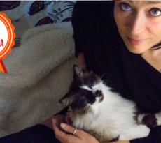 foto di gatti e passioni