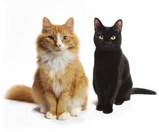 gatti-carattere