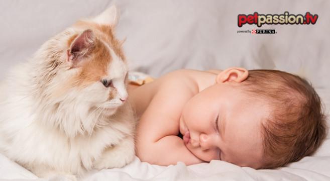 Gatti E Bambini Consigli Di Comportamento E Igiene