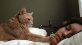 gatto-sveglia-mattina