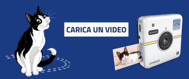 premi-felix-gatto