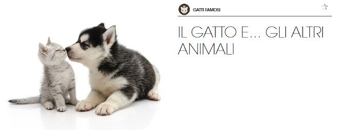 proverbi-animali