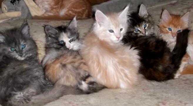 Colore e carattere del gatto c\u0027è un legame?