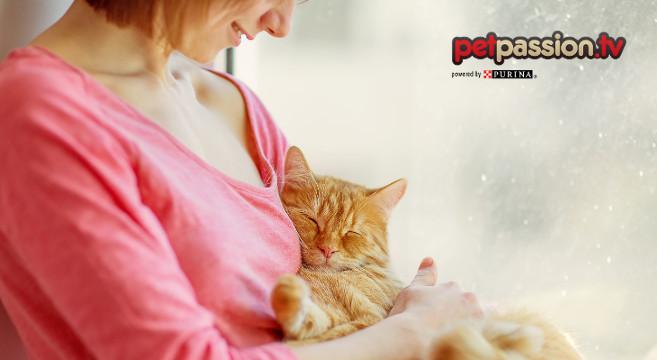 Sai Che I Gatti Pensano Che Luomo Sia Un Gatto Più Grande