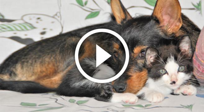 Video Cane E Gatto Coccole E Giochi